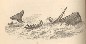 sperm-whale-and-whalemen antique print