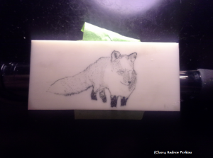 scrimshaw of a fox in the snow on alternative ivory in progress as of 2014-05-31
